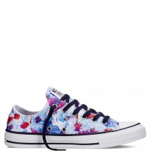Converse Chuck Taylor All Star Ox Flows